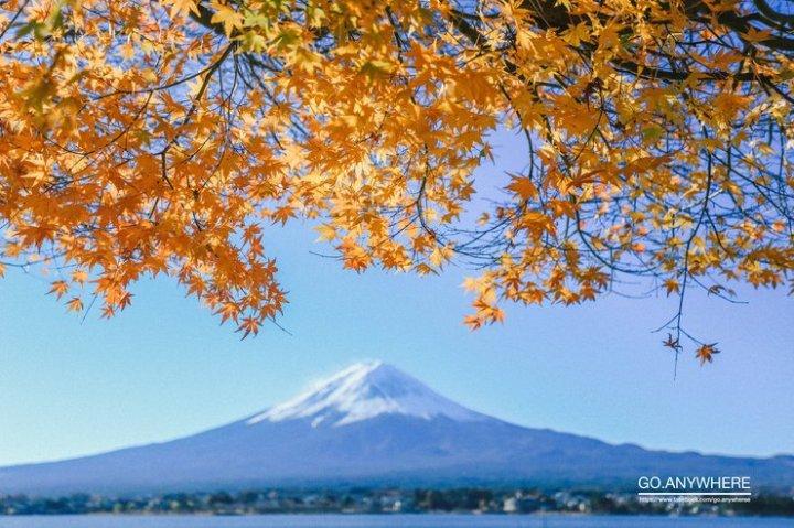 ญี่ปุ่น เขียว เหลือง แดง ( ชี้พิกัดใบไม้เปลี่ยนสี)