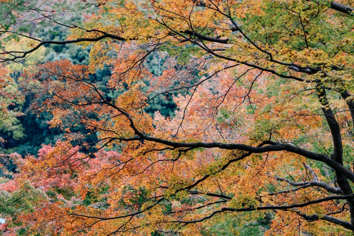 japan_autumnjapan_autumnIMG_4834