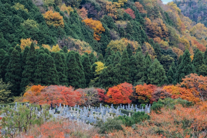 japan_autumnjapan_autumnIMG_4943