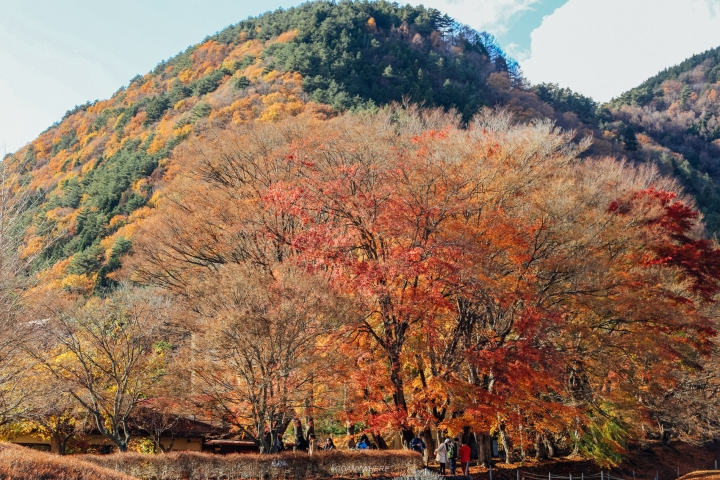 japan_autumnjapan_autumnIMG_5126