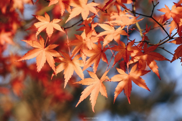 japan_autumnjapan_autumnIMG_5308