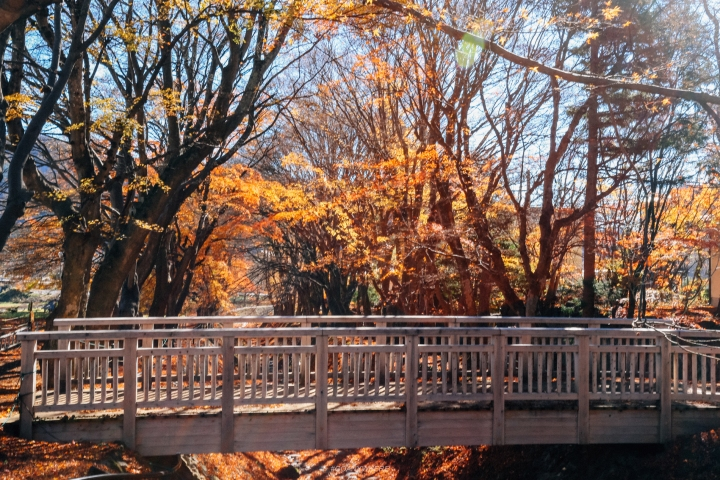japan_autumnjapan_autumnIMG_5900