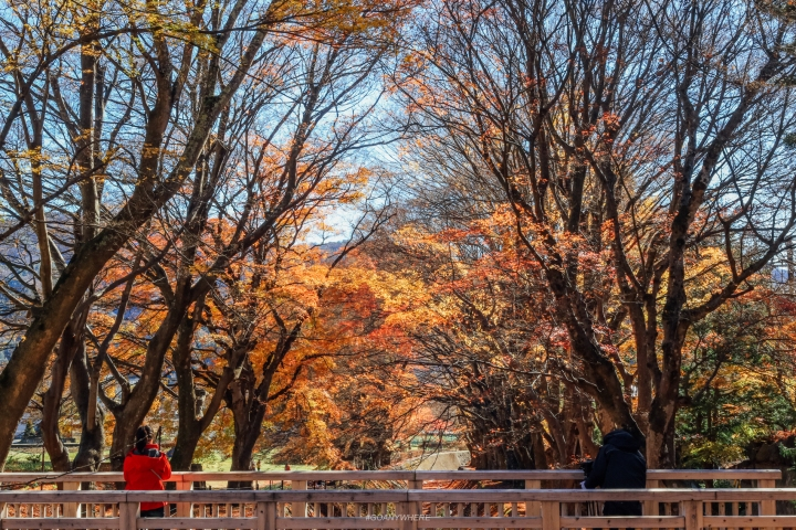japan_autumnjapan_autumnIMG_5924