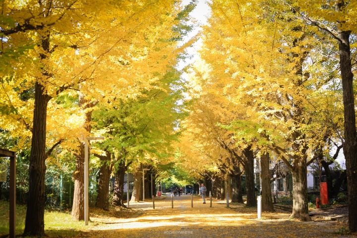 japan_autumnIMG_2656