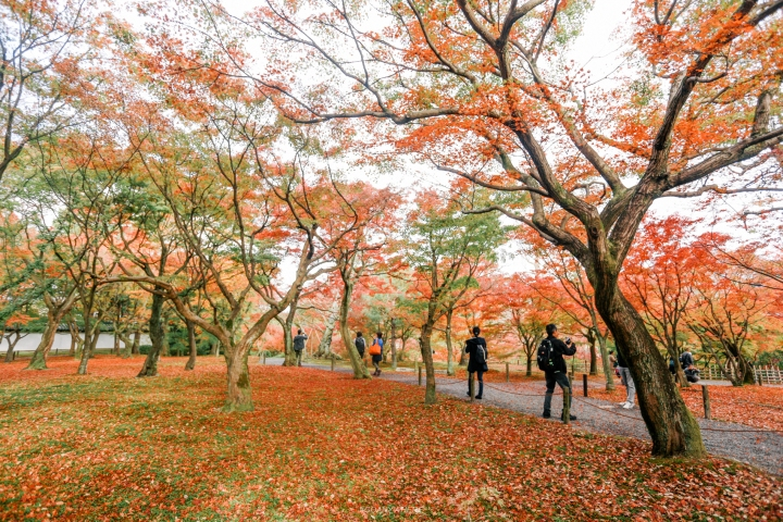 japan_autumnIMG_3761