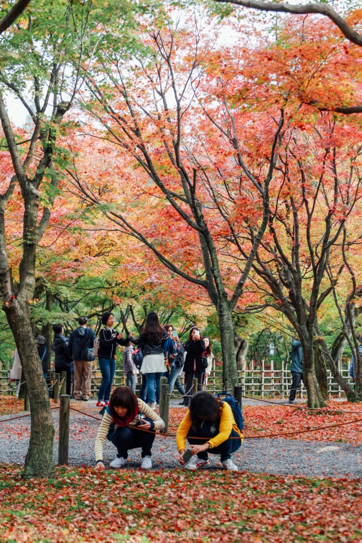 japan_autumnIMG_3768