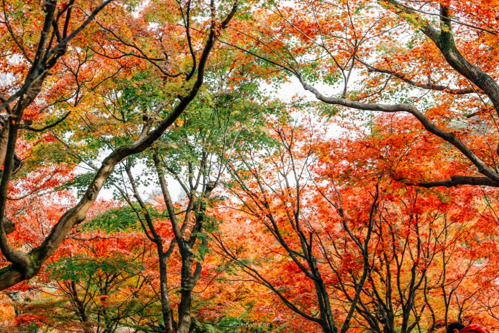 japan_autumnIMG_3770