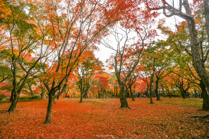 japan_autumnIMG_3787