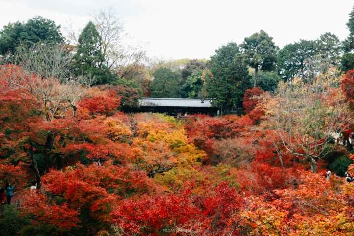 japan_autumnIMG_3960