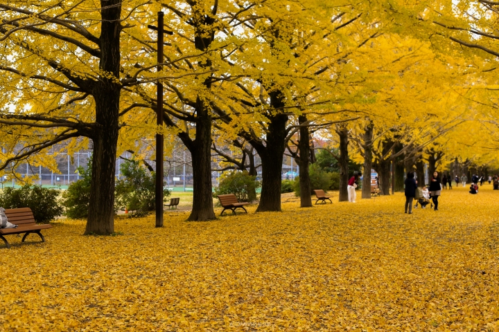 japan_autumnjapan_autumnIMG_2292