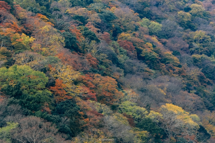 japan_autumnjapan_autumnIMG_6057