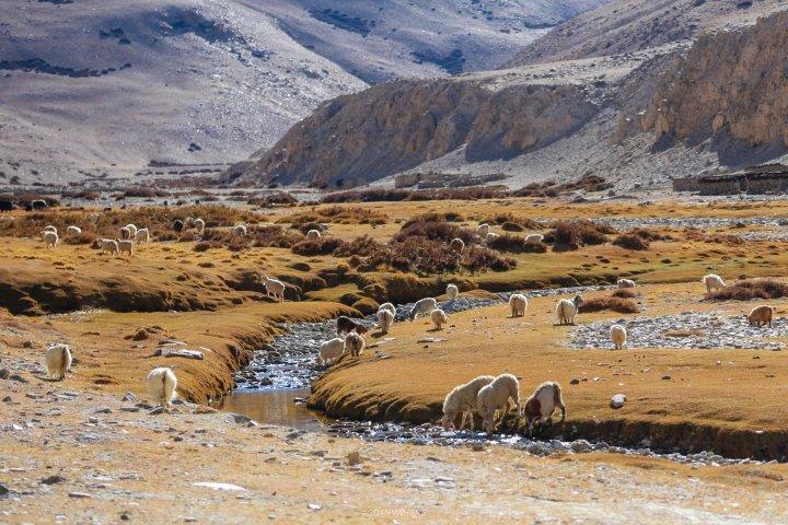 Leh Ladakh_IMG_7881
