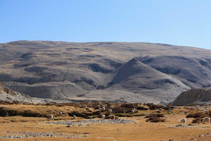 Leh Ladakh_IMG_7906-2