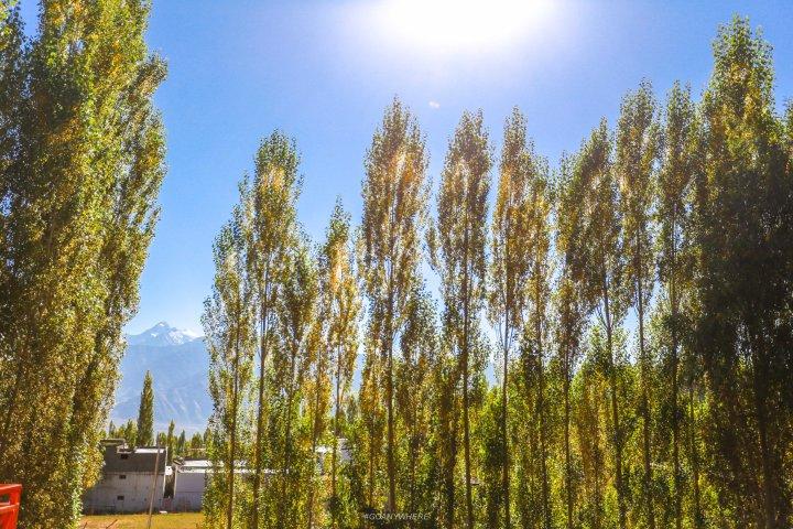 Leh Ladakh_IMG_8263