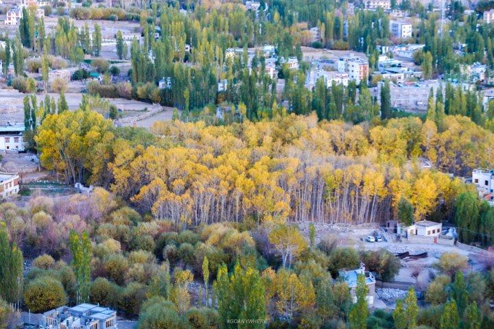 Leh Ladakh_IMG_8655