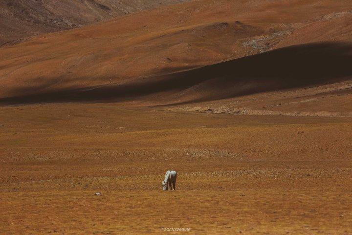 Leh Ladakh_Leh2017IMG_8518