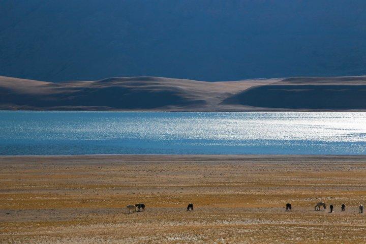 Leh Ladakh_Tsomoriri 4