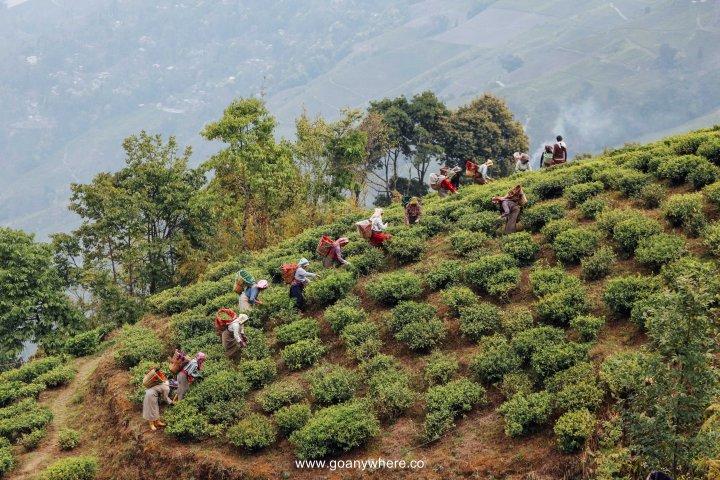 sikkim-india_IMG_5611