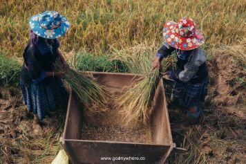 Mu Cang Chai -North VietnamIMG_5344