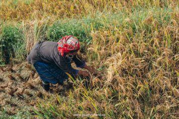 Mu Cang Chai -North VietnamIMG_5419