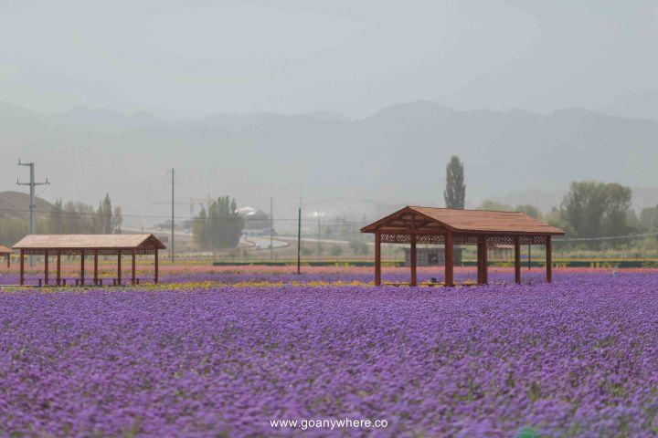 Bingou-rainbow mountain-zhangye-Xian-ซีอาน-จีน-ภูเขาสีรุ้ง-china-จางเย่-IMG_5399