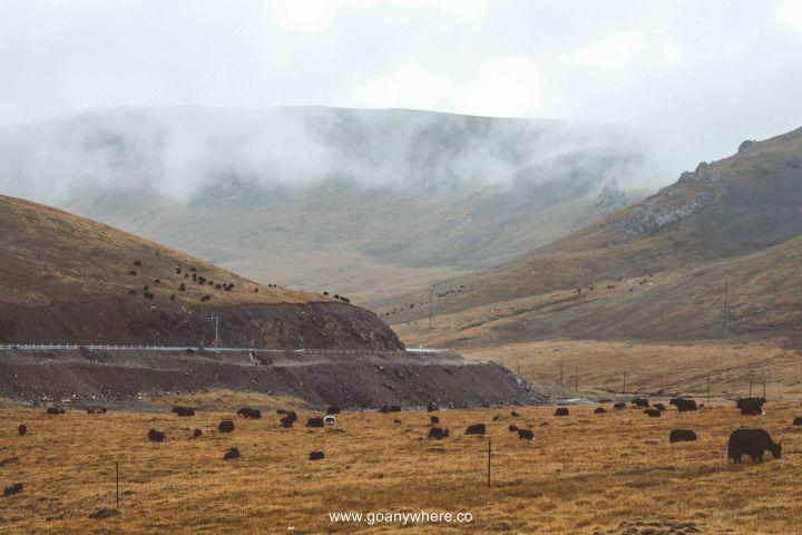 Bingou-rainbow mountain-zhangye-Xian-ซีอาน-จีน-ภูเขาสีรุ้ง-china-จางเย่-IMG_6756